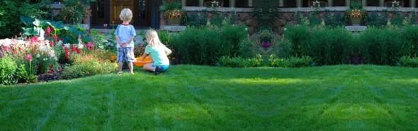 St. Louis Organic Lawn Care